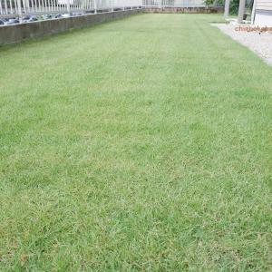 放置の芝生が復活