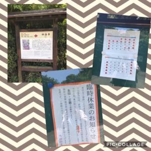 ひとり散歩 鎌倉の苔寺に