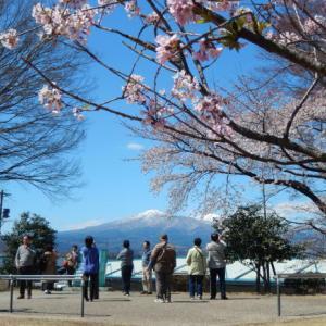 阪急トラピックスで行く三春滝桜と若冲観賞の日帰り旅その2 若冲展