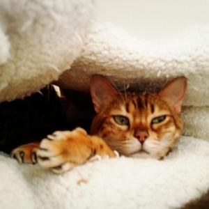 猫がいなくなって1ヶ月ーサーちゃん月命日ー