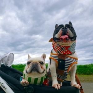 曇り空とフレンチブルドッグ