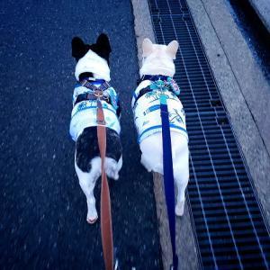 木曜日の朝ん歩