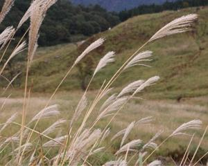 秋を満喫しに砥峰高原まで