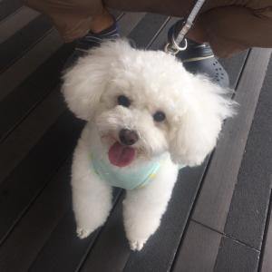 箱根仙石原・芦ノ湖方面へ犬連れ旅行
