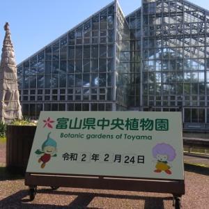 植物園で散歩