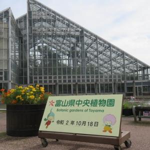 植物園で歩いてきました