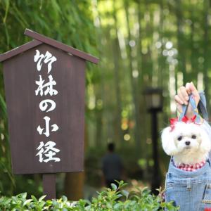 伊豆お誕生日旅行 その6  修善寺でかぐや姫?