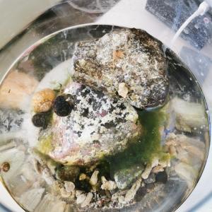 金魚鉢でヤドカリ