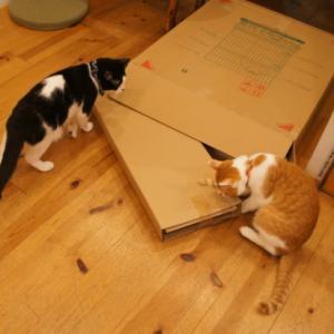 箱の正体は・・・