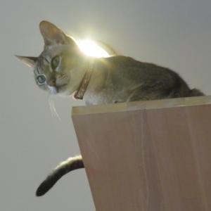 ちゃんと猫団子♪
