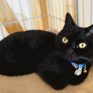 黒猫、脱走する!?