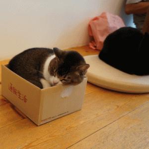 小箱にぴったりにゃんこは、〇〇〇ちゃん!