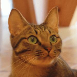 猫団子に入れてもらえなかった、風太