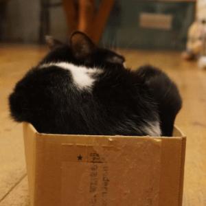 快ちゃんの箱の成れの果て