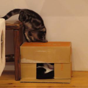 箱の中にいるのは、ダーレだ?