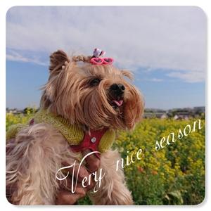 Very nice season♪