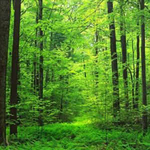 【バイオマスには厳しい時代です。】[FT]バイオマス発電は再エネと認めない、EU規制強化へ:日経新聞 &脱炭素社会の実現に 木材活用と森林整備につなげる法改正:NHK
