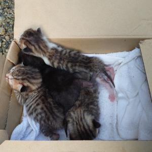 台風の中棄てられた子猫達