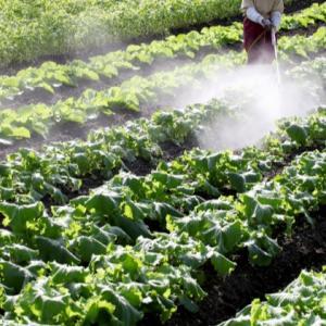 熊本地震以来すべての農作物が値上げ状態のまま.....品薄というカラクリで高騰を装う者達に怒りが