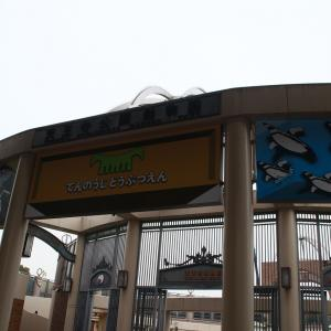 今年もやって来ました! 天王寺動物園