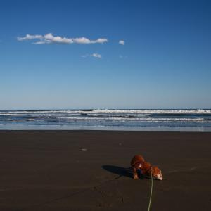 九十九里浜は良い天気、我が家のワンは能天気 ♪