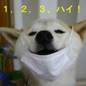 柴犬マリン、11歳になりました 💛