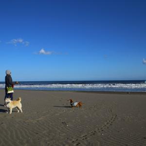 お気に入りの砂浜散歩 ♪