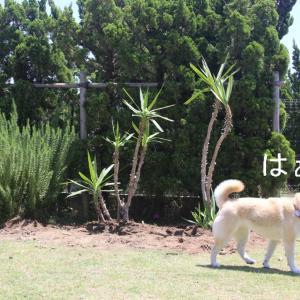 外植えでもOKの観葉植物は、ユッカがオススメ ♪