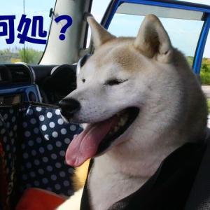 鈴ちゃん、車の初体験 🚙