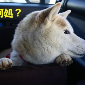 ウキウキドライブに行きたいね~♪