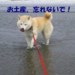 広島から九十九里へ出発だぁー🚅