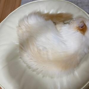 暑くても寒くても猫はよく眠る……