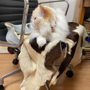 そこは私の椅子……