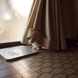 大晦日〜元日