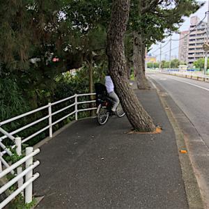 歩道が松を避けてます
