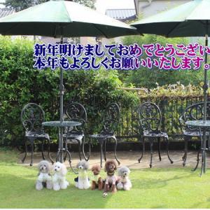 トイプードル子犬をお探しなら=6頭紹介しています