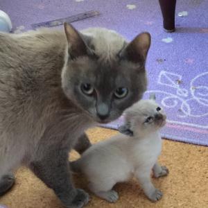 チビっこと母猫