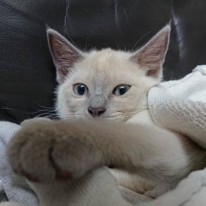 子猫のお迎え