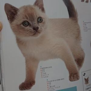 世界の猫カタログ 2020到着