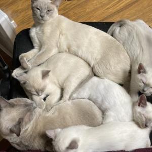 子猫ワクチン終了