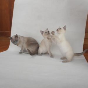 子猫の撮影大会続き
