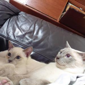 最近の子猫たち