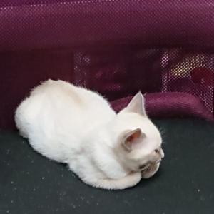 子猫の寝床