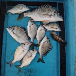 ルアー釣り客とふかせ釣り客が半々の割合