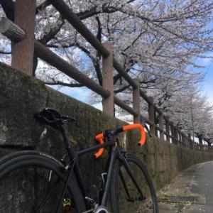 桜パトロール。