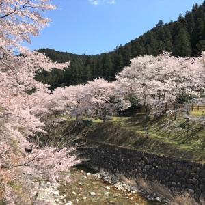桜&おそろい