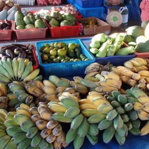 バナナは一度実がなると、枯れる。ノニの木を剪定しました。ガンガン伸びてね。。