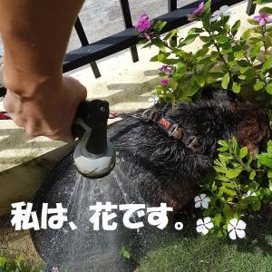 香港在住のワンコファミリーのみなさま。Dogotel&SPAでワンコ石けんお試しください