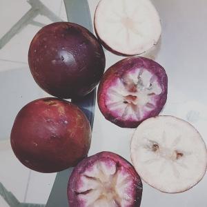 スターアップルを切りながら・・昔の英語だと、appleって「果物」全般を指していたらしい。