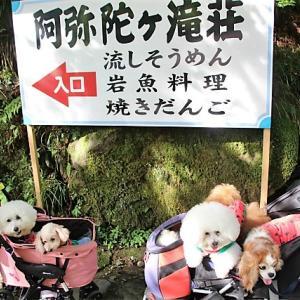 ✿夏旅行は岐阜へ♪スタートは涼を求めて阿弥陀ヶ滝✿